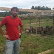 первый десяток овец.jpg