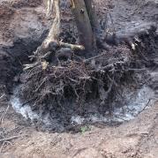 омыли пень из машинной мойки, чтоб стал полегче, очистился от земли, теперь он лежит, сохнет
