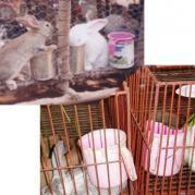 африканские поилки для кроликов