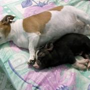 Друзья - пёс и поросёнок