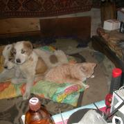 """Говорят про тех, кто ругается и дерётся: """"Живут как кошка с собакою!"""" Посмотрите: как на самом деле живут! И пиво тут не причём: им не положено ни по статусу, ни по возрасту, и вообще-самим мало! Это было в феврале 2009 года."""
