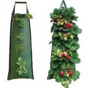 Способы выращивания клубники, способ №1