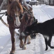 Не спеши, лошадь