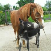 поцелуй ослика и лошадки