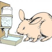 Поилка для кроликов из бутылки
