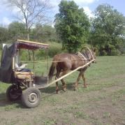 На чём и на ком ездят в сельской местности...