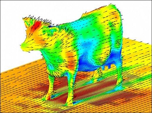 Визуализация компьютерной модели обтекания коровы потоком воздуха.