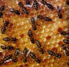 Снижение стойкости пчел к высокой температуре