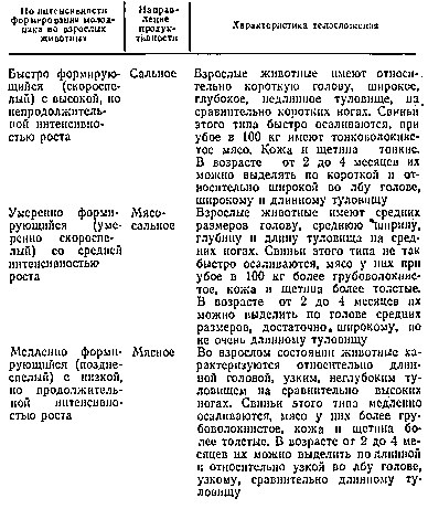 Классификация типов конституции свиней и их характеристика