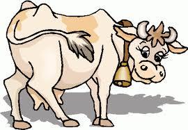 Молочная корова.