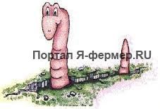 земляные черви, рисунок