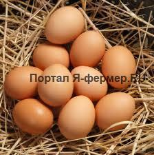 Продукты птицеводства выделяются значительной питательностью и великолепными вкусовыми качествами