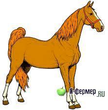 Как определить живую массу лошади без весов. Определение живой массы лошадей.
