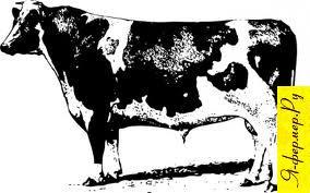 Убой скота, как снять шкуру