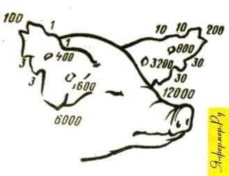 Ключ к нумерации свиней выщипами