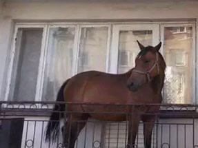 Лошадь на балконе фото.
