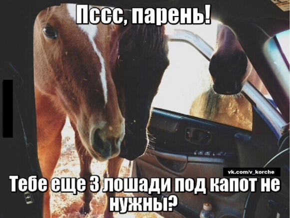 Три лошади и автомобиль.