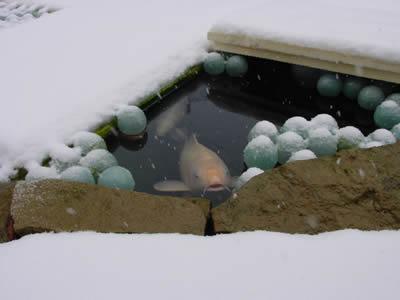 Пруд зимой, фото