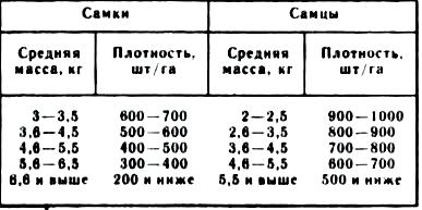 Оптимальная плотность посадки производителей карпа в рассадные пруды