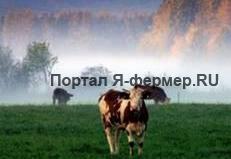 Как предотвратить родильный парез у коровы