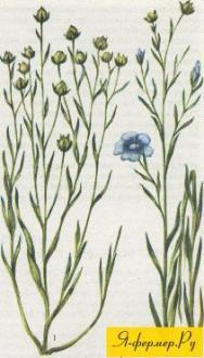 Техника выращивания льна
