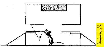 Ловушка для крыс схема.