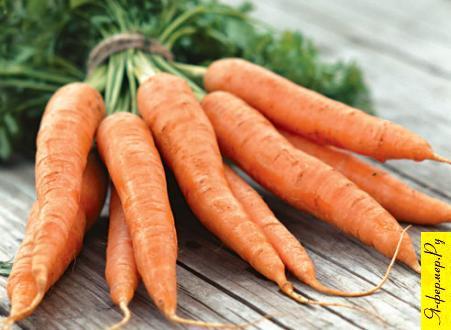Морковь — особенности выращивания и сорта.
