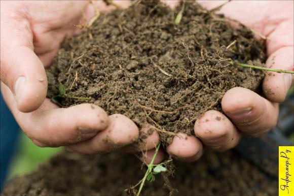 Подбираем почву под овощи
