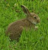 Кролиководство – самая доходная из всех отраслей животноводства