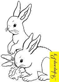 Респираторные заболевания у кроликов