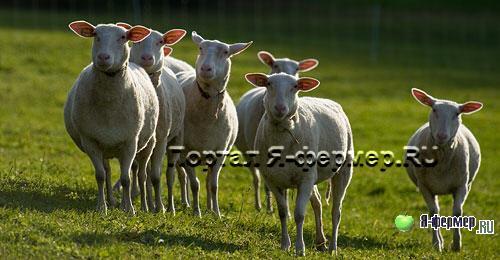 Эндометрит у животных сельскохозяйственного назначения: причины, симптомы, лечение