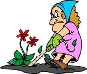 Биологические особенности сорняков