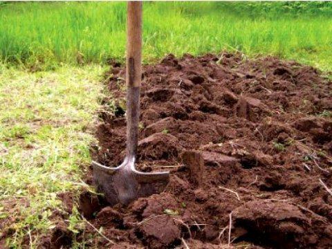 О сроках внесения органических удобрений