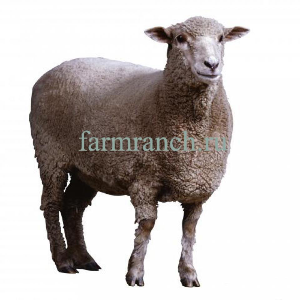 схема электроизгороди для овец для умелых рук