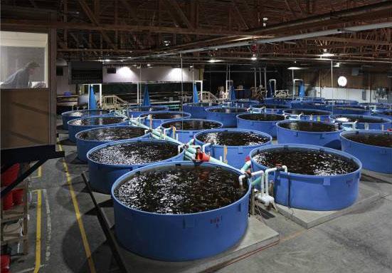 Выращивание рыбы в домашних условиях круглый год