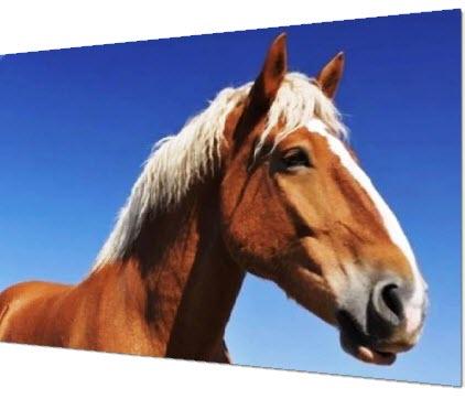 «Старый Билли», который родился в Англии и был тягловой лошадью.