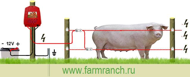 Электропастух для свиней.jpg