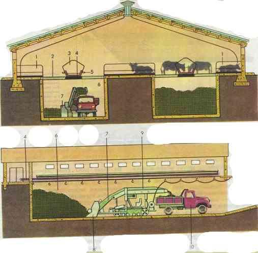 Схема коровника с подпольными