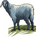 Аватар пользователя kozovod