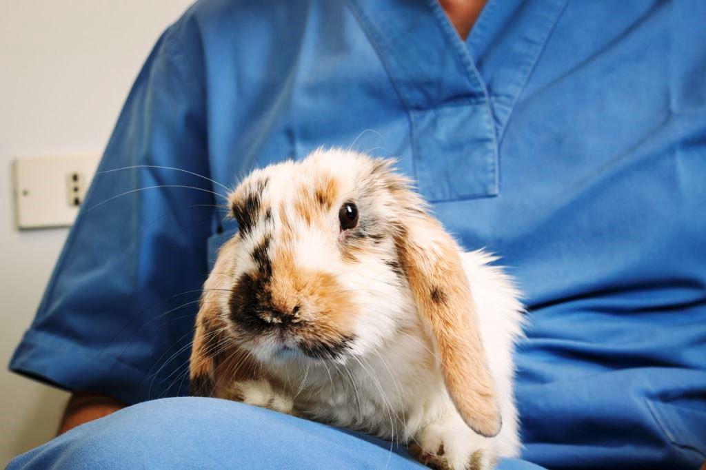 Больной кролик фото