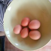 Первые яйца.jpg
