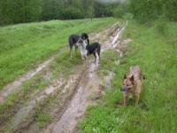 Отвратительная дорога после дождя