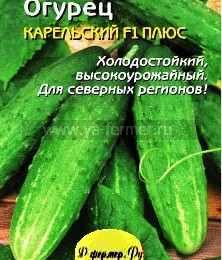 Огурцы сорта Карельский плюс фото