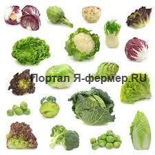 Особенности агротехники цветной, краснокочанной, савойской и брюссельской капусты