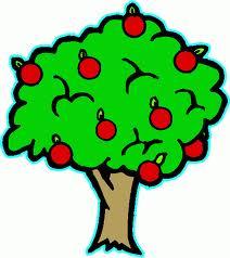 Сорта плодовых деревьев и кустарников