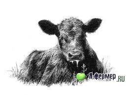Молозивный токсикоз - заболевание новорожденных животных сельскохозяйственного назначения