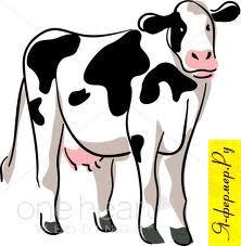 Крупный рогатый скот: откорм и нагул