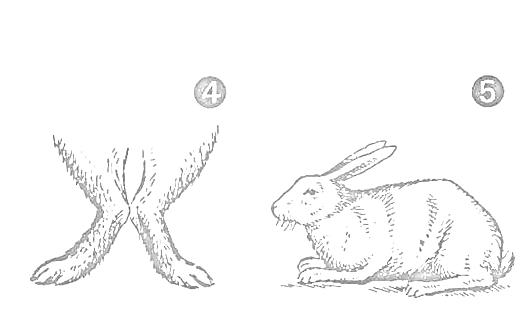 Дефекты у кроликов.