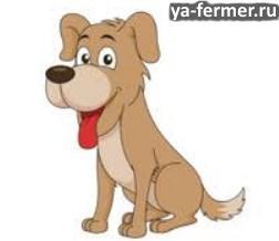 Дрессировка собак, выборка предмета по запаху владельца
