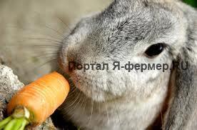 Кормление кроликов, фото